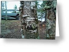 Birch Bark 3 Greeting Card