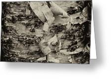 Birch Bark Detail Monotone Img_6361 Greeting Card