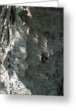 Birch Bark In Sun And Shadow Greeting Card
