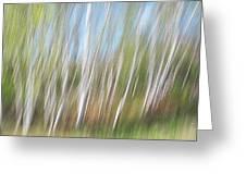 Birch Dream #3 Greeting Card