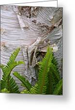 Birch Fern Greeting Card