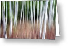 Birch Grove Impressions Greeting Card