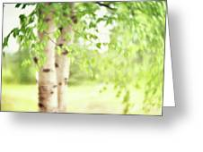 Birch In Spring Greeting Card