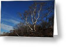 Birch On A Cliff  Greeting Card