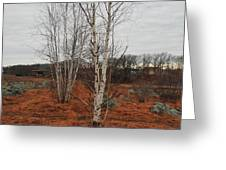Birch On A Rocky Hill  Greeting Card