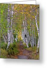Birch Path Greeting Card