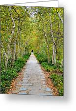 Birch Pathway Perspective Greeting Card