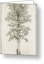 Birch Tree Greeting Card by Charles Harden