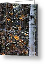 Birch Tree In Winter Greeting Card