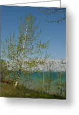 Birch Tree Over Lake Greeting Card