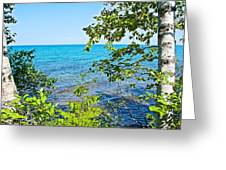 Birch Trees Above Lake Superior Off North Country Trail In Pictured Rocks National Lakeshore-mi Greeting Card