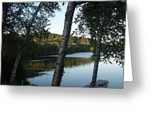 Birch Trees Along The Lake Greeting Card
