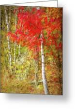 Birch Trees In Autumn Greeting Card