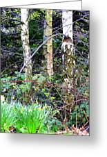 Birch Trees In London Greeting Card by Mindy Newman