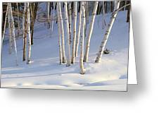 Birch Trees In The Snow, South Greeting Card