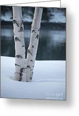 Birch Twins In Snow Greeting Card