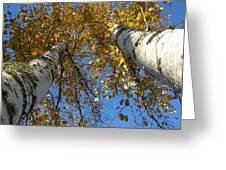 Birch Twins Greeting Card