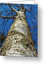 Birch Greeting Card