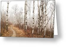 Birch Walk Greeting Card