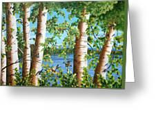 Birches Along The Androscoggin River Greeting Card