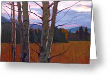 Birches At Twilight Greeting Card