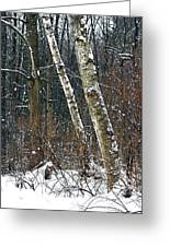 Birches During A Snowfall Greeting Card