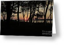 Birches Watch The Sunset Greeting Card