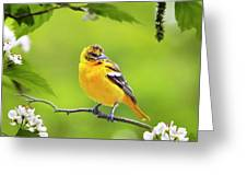Bird And Blooms - Baltimore Oriole Greeting Card