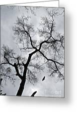 Bird And Tree Greeting Card