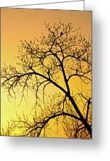 Bird At Sunset Greeting Card
