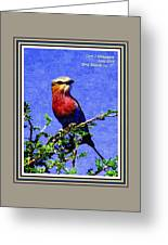 Bird Beauty - No. 7 P A With Decorative Ornate Printed Frame. Greeting Card
