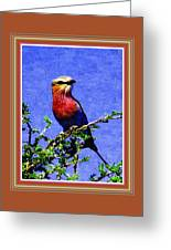 Bird Beauty - No 7 P B With Alternative Decorative Ornate Printed Frame. Greeting Card