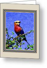 Bird Beauty - No 7 P B With Decorative Ornate Printed Frame. Greeting Card