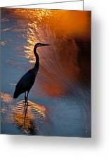 Bird Fishing At Sundown Greeting Card