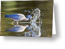 Bird Fishing In Lake Greeting Card