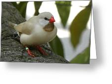 Bird Gazing Greeting Card