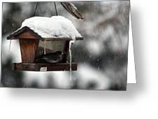 Bird House Blues Greeting Card