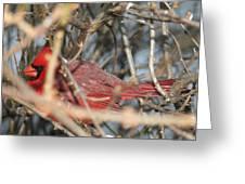 Bird In A Bush Greeting Card