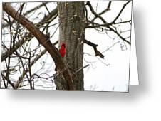 Bird In A Tree Greeting Card