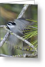 Bird In Action Greeting Card