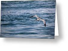 Bird In Flight Over Water Greeting Card