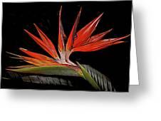 Bird In Flight Vivid Colors Greeting Card