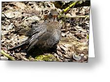 Bird In Hiding Greeting Card