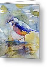 Bird In Lake Greeting Card