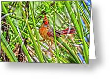 Bird In The Brush H D R Greeting Card