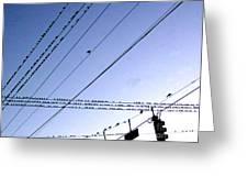 Bird Invasion Greeting Card