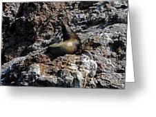 Bird Island 6 Greeting Card