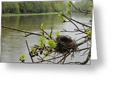 Bird Nest In Ash Tree Branches Greeting Card