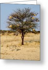 Bird Nests And A Cheetah Greeting Card