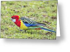 Bird Greeting Card